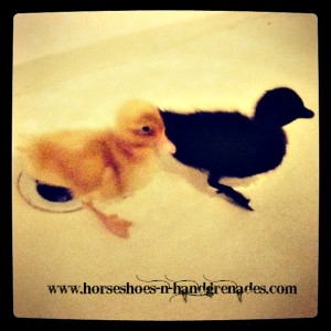 Esther (Black) & Princess (Yellow) Swimming in the Bathtub as ducklings.