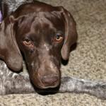 Raising A Puppy – Puppyhood.com
