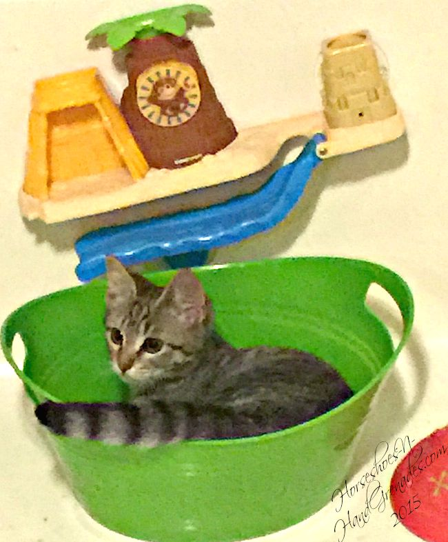 As cute as she is, she's cat #3 in our house, which means litter box duty is a priority!