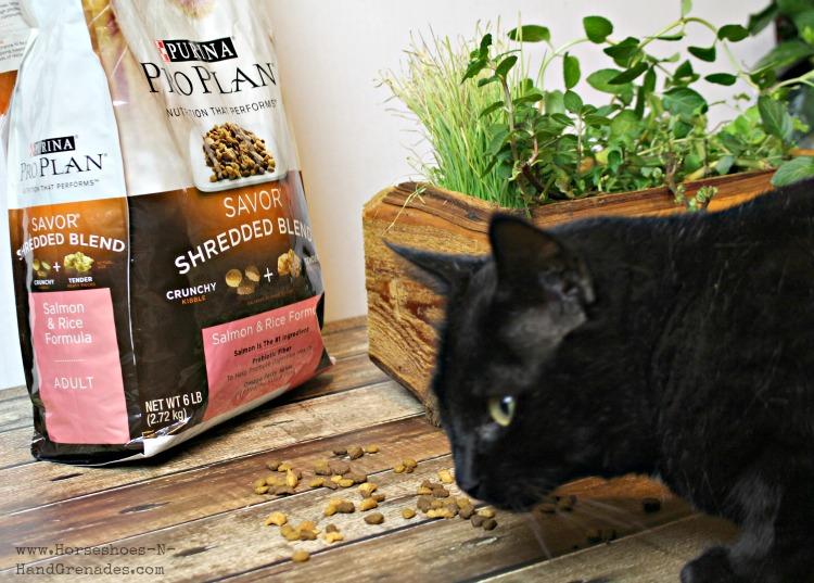 Cat Eating Purina Pro Plan