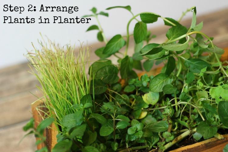 Step 2 Arrange Plants