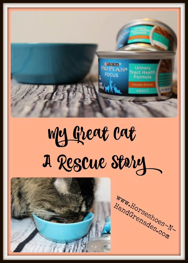 My Great Cat - A Rescue Story