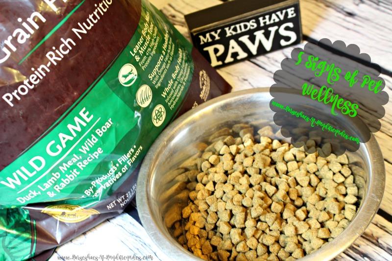 5-signs-of-pet-wellness