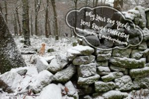 Why Your Dog Needs Year Round Protection #12Bravecto