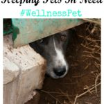 Commitment to Helping Pets In Need #WellnessPet