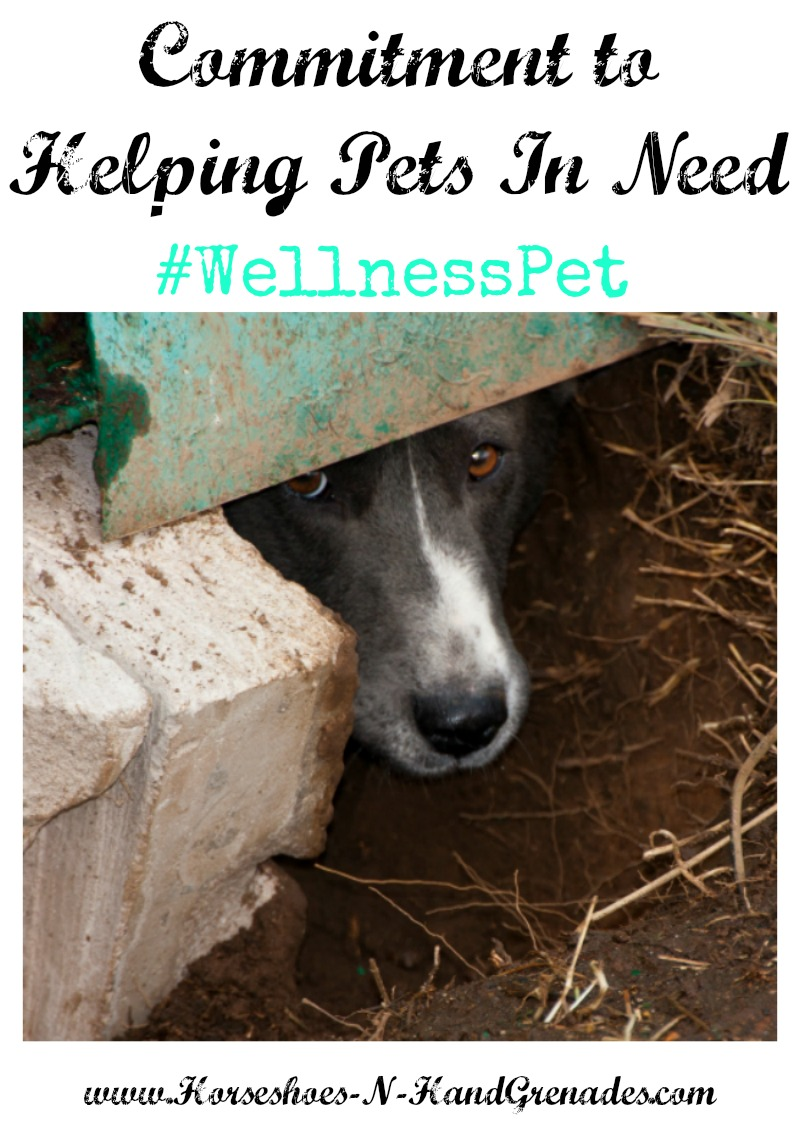 helping-pets-in-need