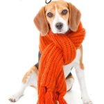 Winter Pet Care Tips for Dog Owners #12Bravecto