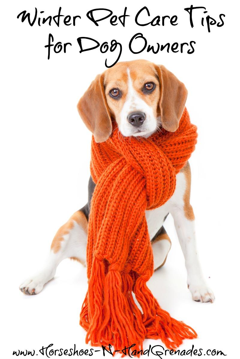 winter-pet-care-tips-12bravecto
